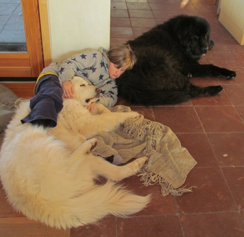 Nicw:dogs