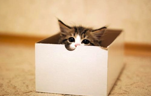 The box with the kitten